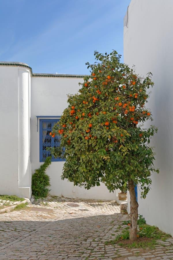 Der Orangenbaum stockfotos