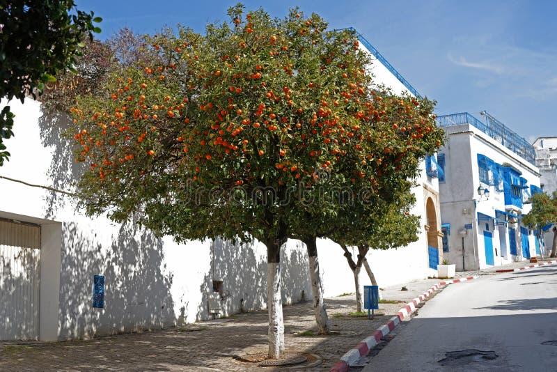 Der Orangenbaum lizenzfreie stockfotografie