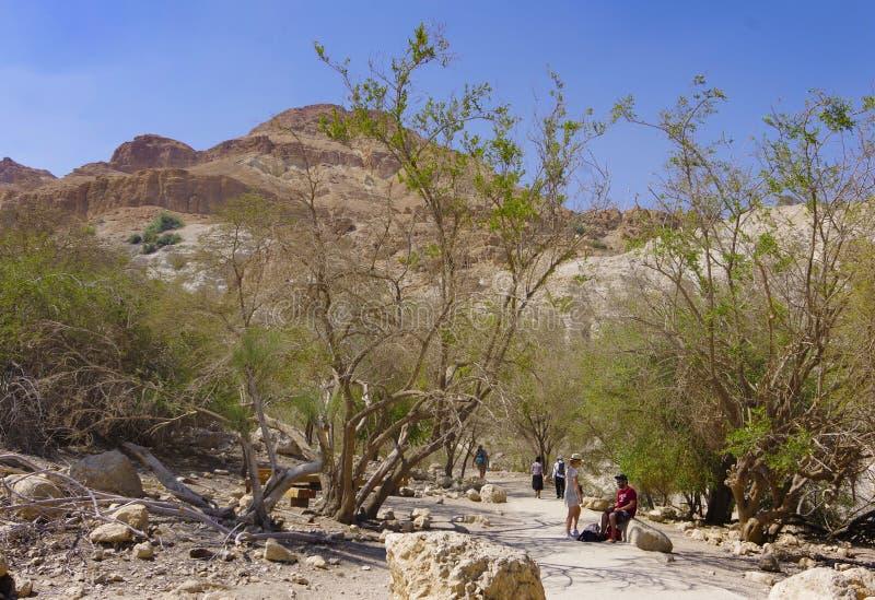Der Park in Israel ist Ein Gedi stockbilder