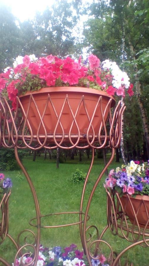 Der Parksommer und der große Vase zu den Blumen stockbilder
