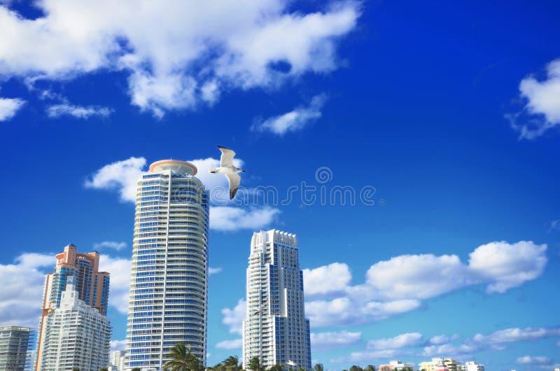 Der perfekte Tag in Miami mit blauen Himmel und exzellenten Gebäuden lizenzfreies stockbild