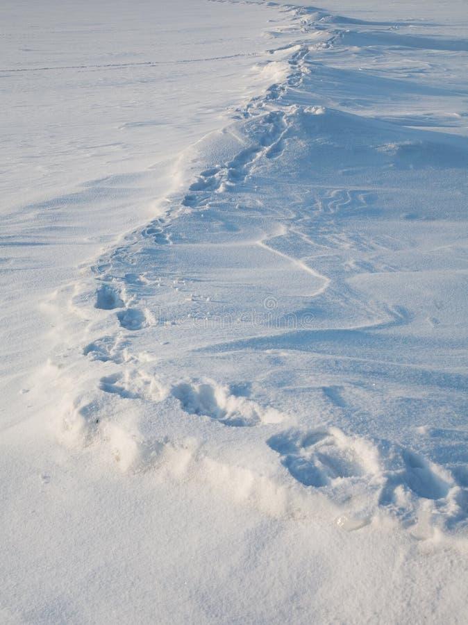 Der Pfad auf der Tundra stockfotografie