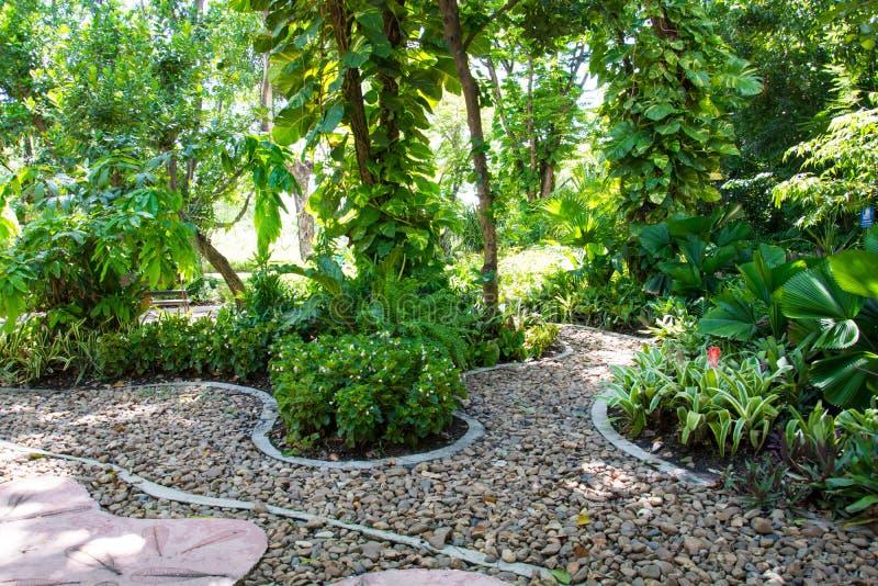 Der Pfad im Garten stockfotos