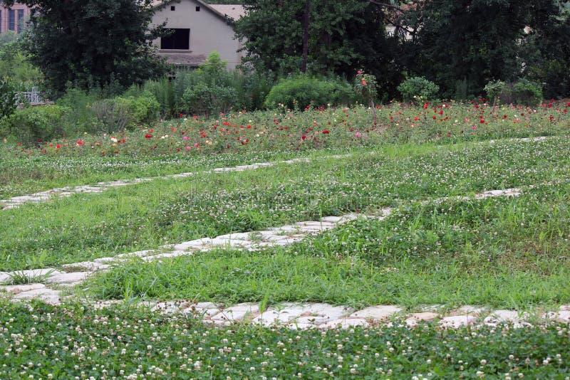 Der Pfad im Garten stockbild