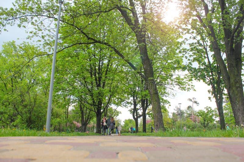 Der Radweg- und Wegweg durch szenische grüne Rasen und Parklands bietet eine ruhige entspannende Fahrt auf einen sonnigen Morgen  lizenzfreies stockfoto