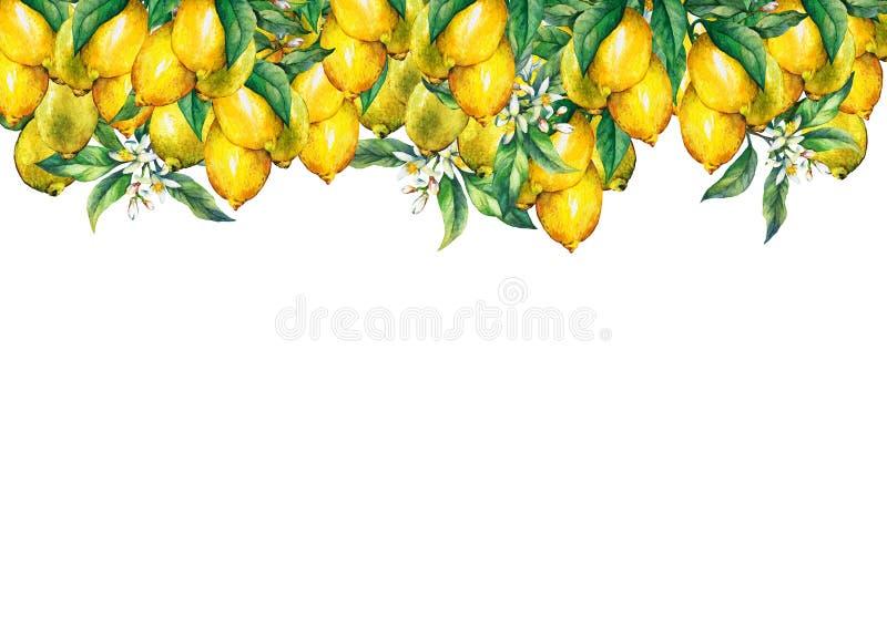 Der Rahmen der Niederlassungen der frischen Zitrusfruchtzitronen mit Grünblättern und -blumen stock abbildung