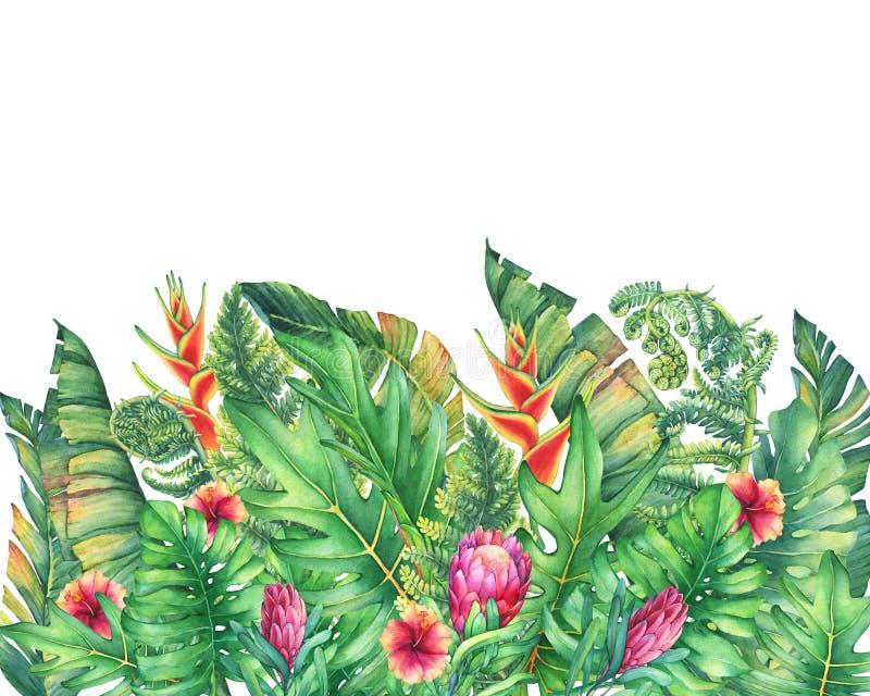 Der Rahmen der Niederlassungen mit purpurroten Proteablumen, Hibiscusen und tropischen Anlagen vektor abbildung