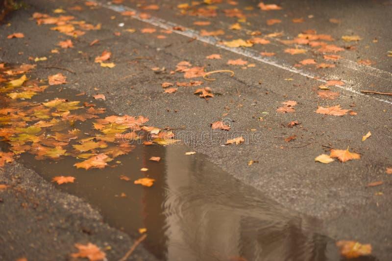 Der Regen hat Pfützen in den Löchern des Asphalts gebildet lizenzfreies stockfoto