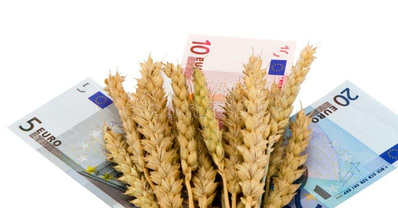 Der reifen bargeld-Banknotenweiß Ernteohren des Weizens Euro lizenzfreies stockfoto
