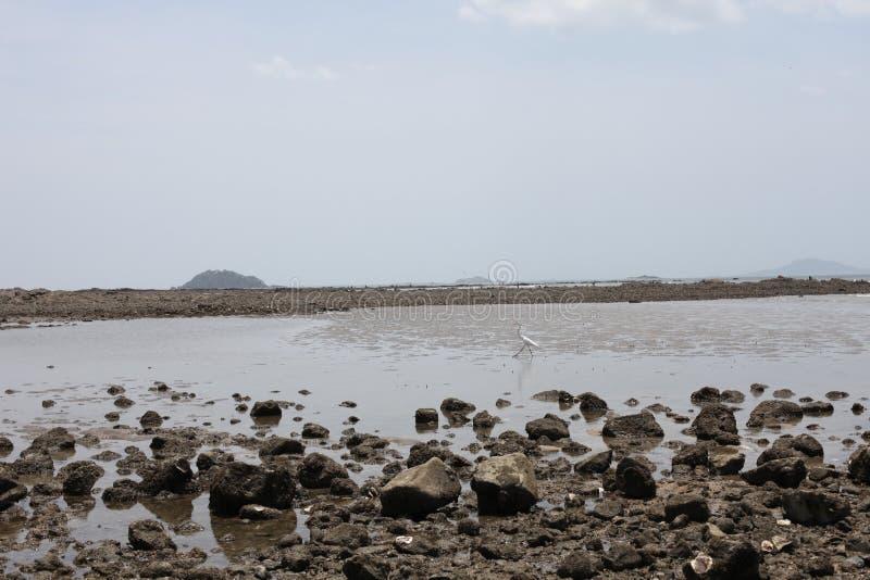 Der Reiher geht durch Meer lizenzfreie stockfotografie