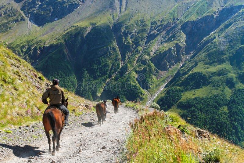 Der Reiter geht auf ein Pferd in den Bergen stockfoto