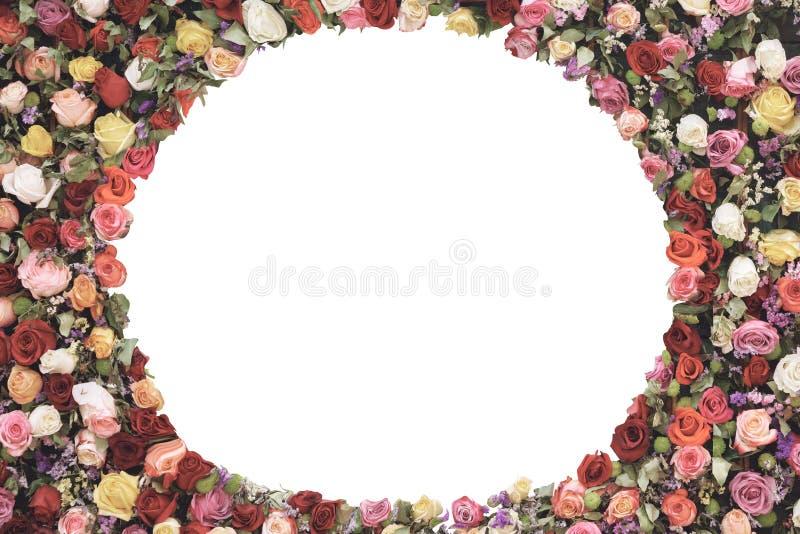 Der runde Rahmen, der von den Rosen gemacht wird, blüht auf weißem Hintergrund mit Kopienraum für Ihren Text Weinlesekarte, flach lizenzfreies stockbild