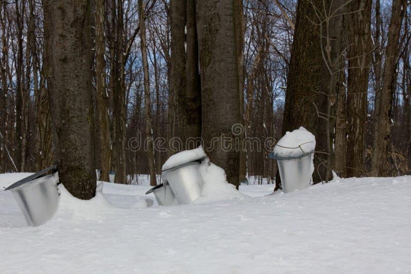 Der Saft von Ahornbäumen lizenzfreie stockfotografie