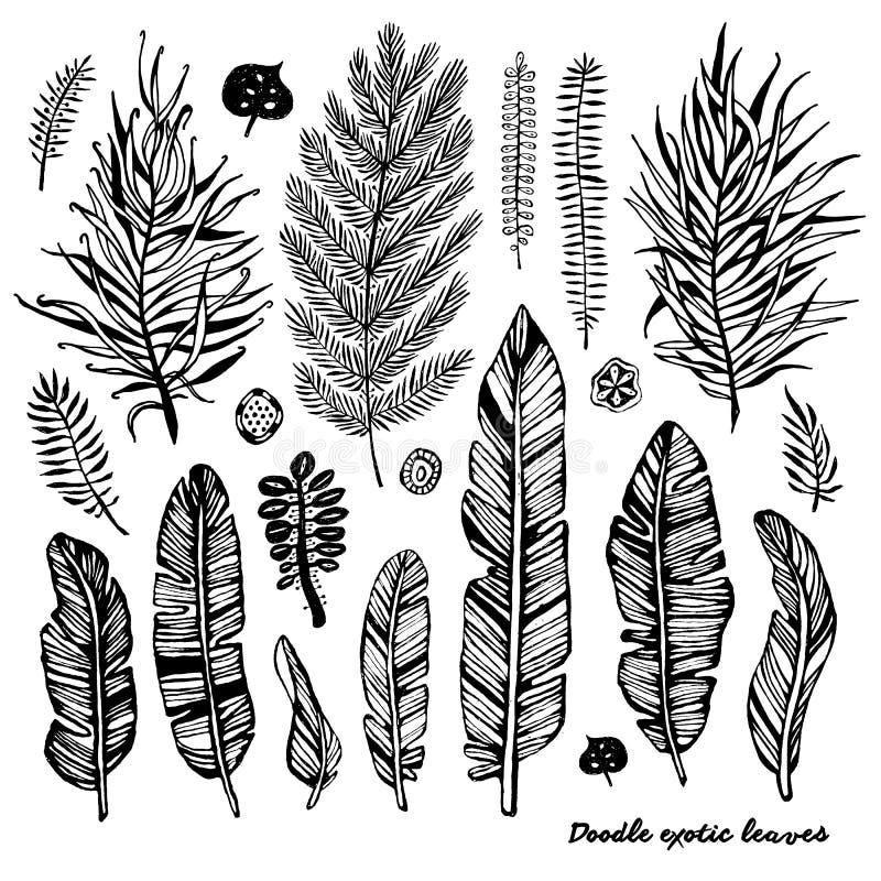 Der Satz des schwarzen Gekritzels exotisch, Banane verlässt auf einem weißen Hintergrund Botanische Illustration des Vektors, Ele stock abbildung
