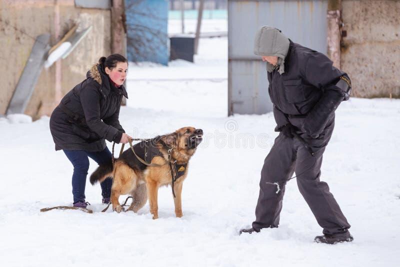 Der Schäferhund verteidigt aggressiv die Hosteß Gomel, Bel lizenzfreie stockfotografie