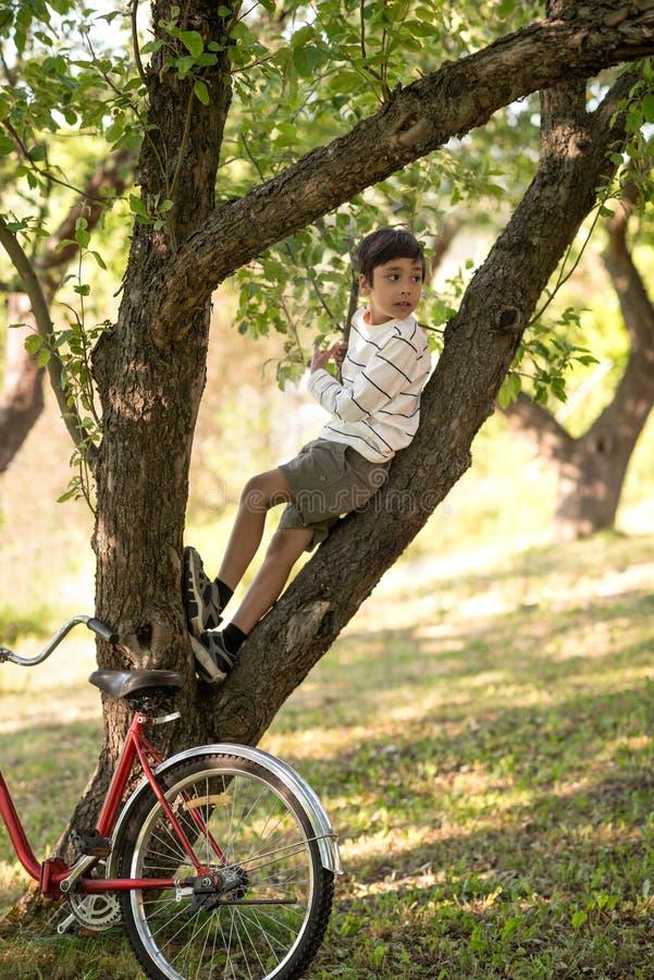 Der Schüler sitzt auf dem Baum im Apfelgarten oder -wald er lo stockbild