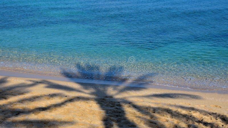 Der Schatten der Palme auf sandigem Strand stockfoto
