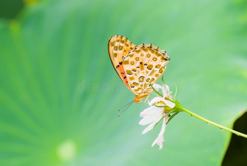 Der Schmetterling auf den Blumen stockfotografie