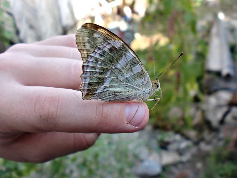 Der Schmetterling sitzt auf seinem Arm und fliegt nicht weg lizenzfreies stockbild
