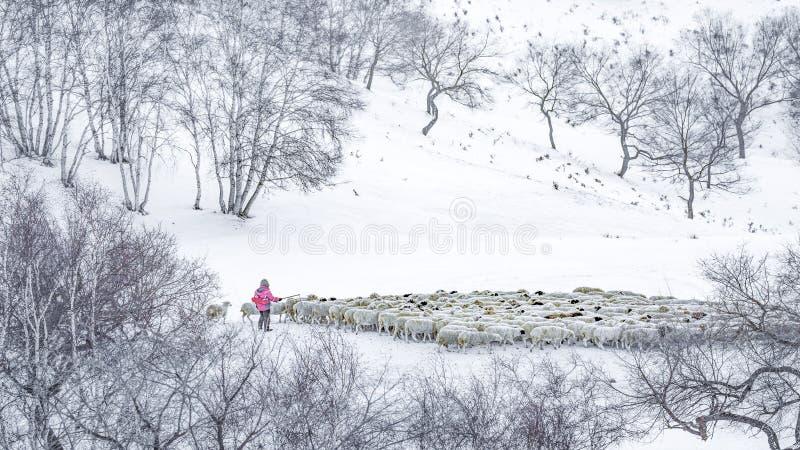 Der Schnee stockbilder