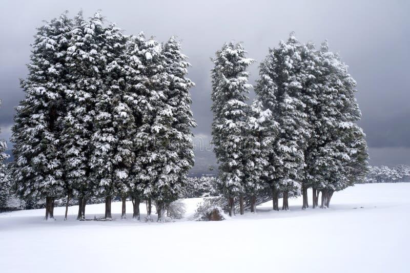 Der Schnee mit Bäumen stockbild