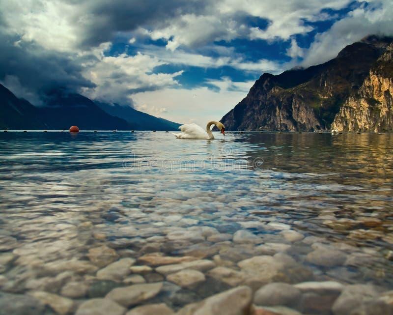 Der Schwan und sein See lizenzfreies stockbild