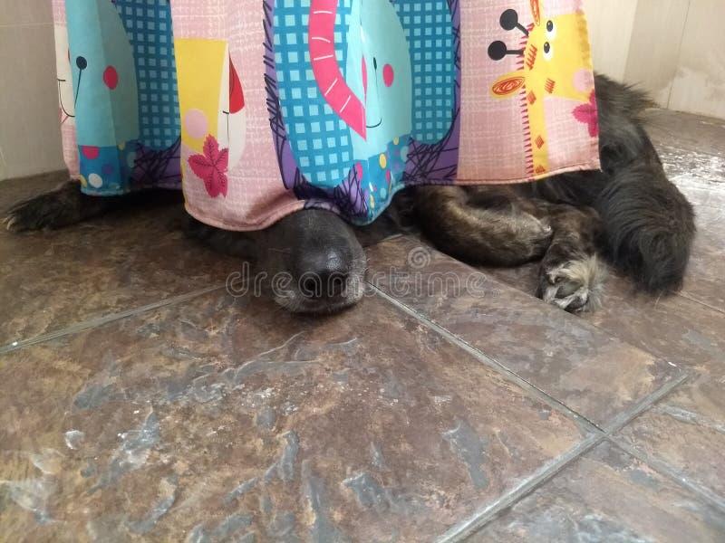 Der schwarze Hund, der im Badezimmer sich versteckt, weil es vor Gewittern Angst hat lizenzfreie stockfotos