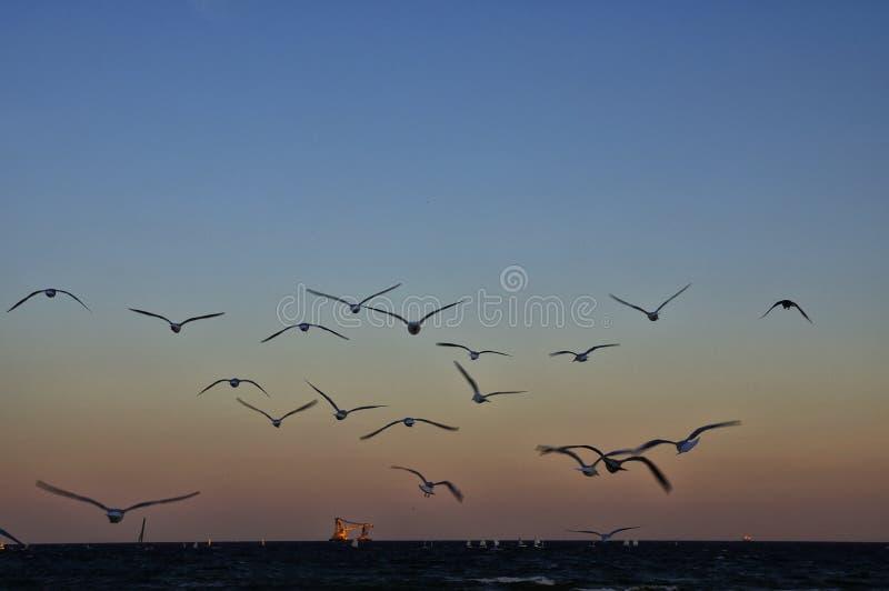 Der Seemöwenschlüssel über Ostsee, Gdynia, Polen lizenzfreie stockfotografie
