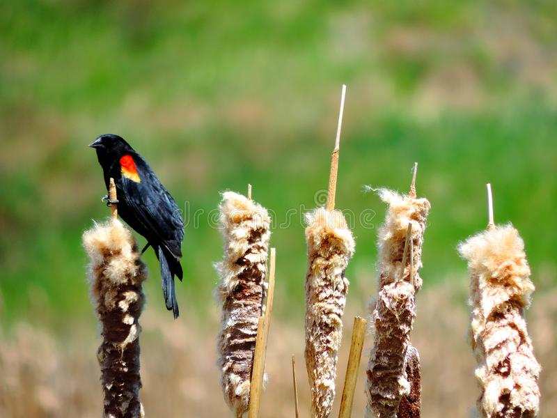 Der sitzende Vogel stockbild