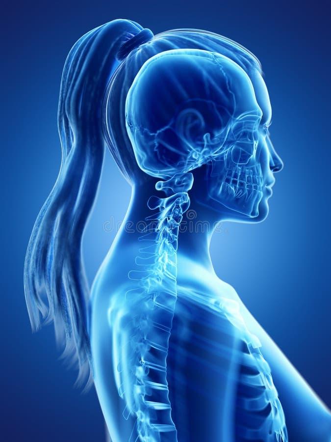 der skelettartige Hals einer Frau lizenzfreie abbildung