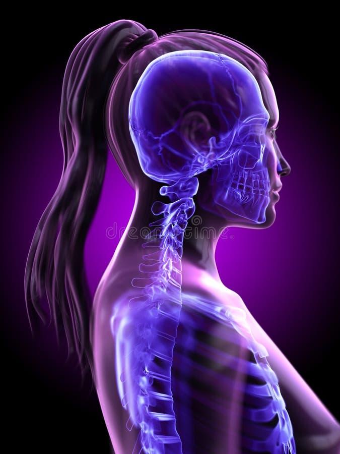 der skelettartige Hals einer Frau vektor abbildung