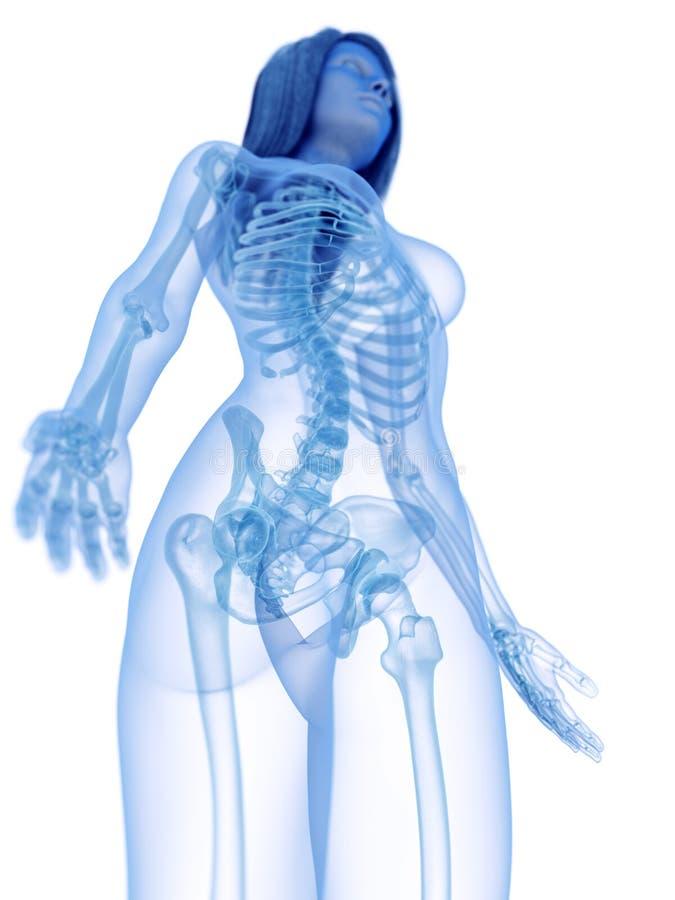 Der skelettartige obere K?rper stock abbildung