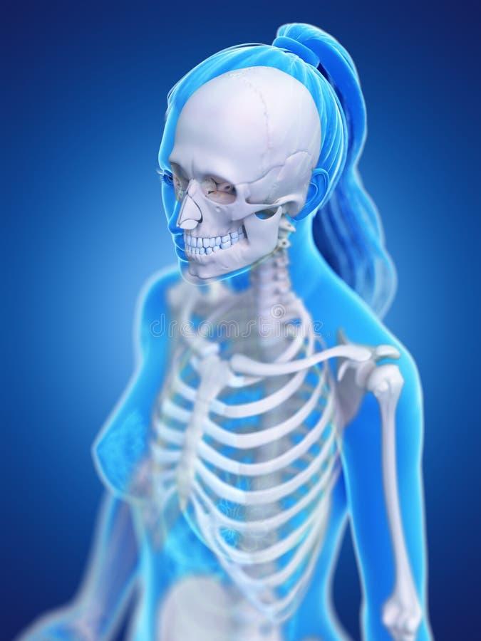 Der skelettartige Thorax einer Frau vektor abbildung
