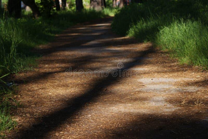 Der Sommerwaldweg zwischen dem Gras stockfotos