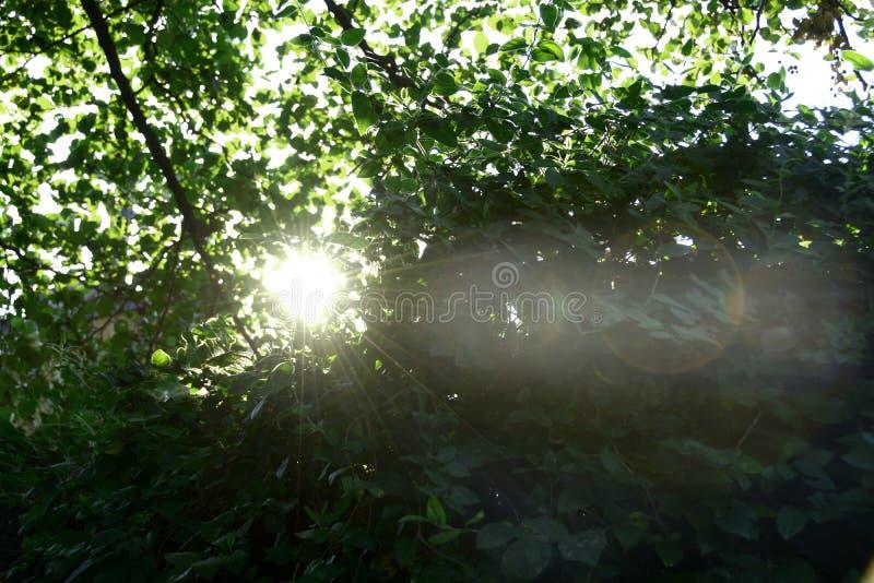 Der Sonnenschein lizenzfreies stockfoto