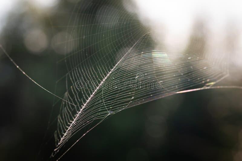 Der Spinnennetz-Spinnennetznahaufnahmehintergrund lizenzfreies stockbild