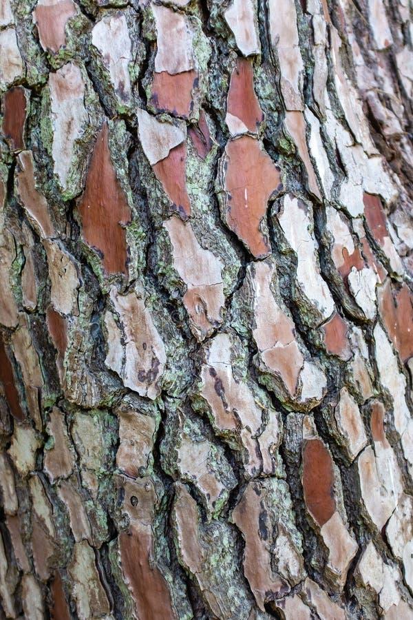 Der Stamm eines Baums im Herbst lizenzfreie stockfotos