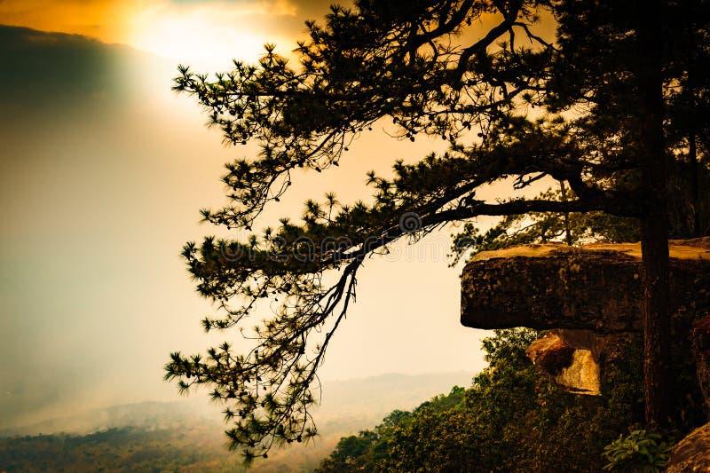 Der Standpunkt Nationalparks Phu Kradueng mit Bäumen, Berg und und Sonnenunterganglicht lizenzfreie stockfotografie