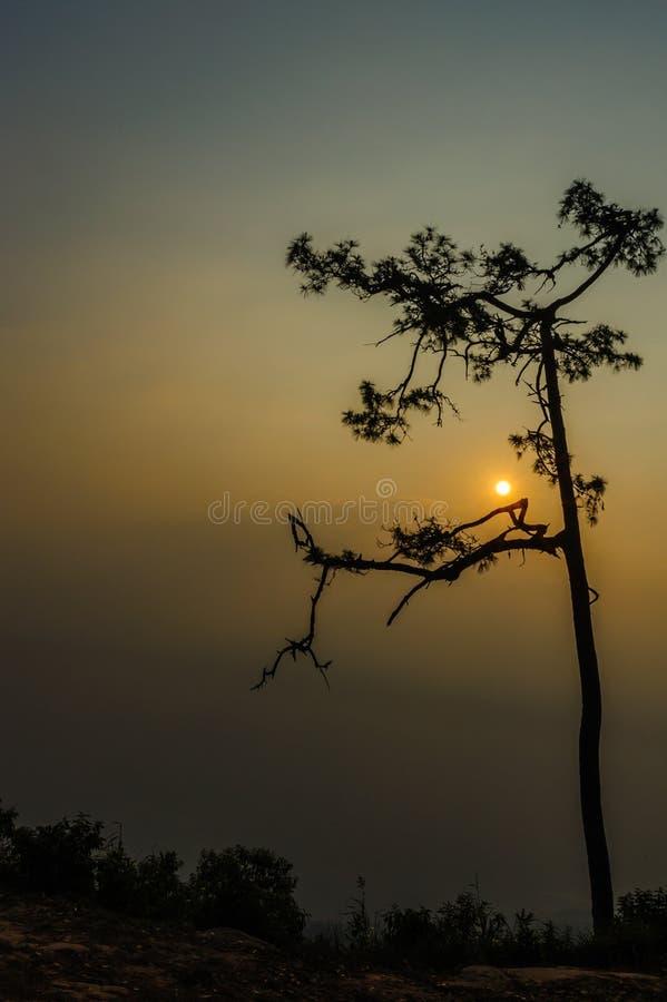 Der Standpunkt Nationalparks Phu Kradueng mit den Bäumen und der Morgensonne stockfotos