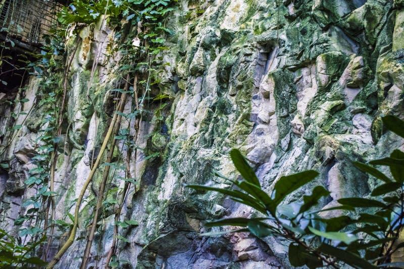 Der Steinfelsen im tropischen Wald mit wilden Grünpflanzen am warmen Sommernachmittag nave landschaft Schöne Ansicht lizenzfreie stockfotografie