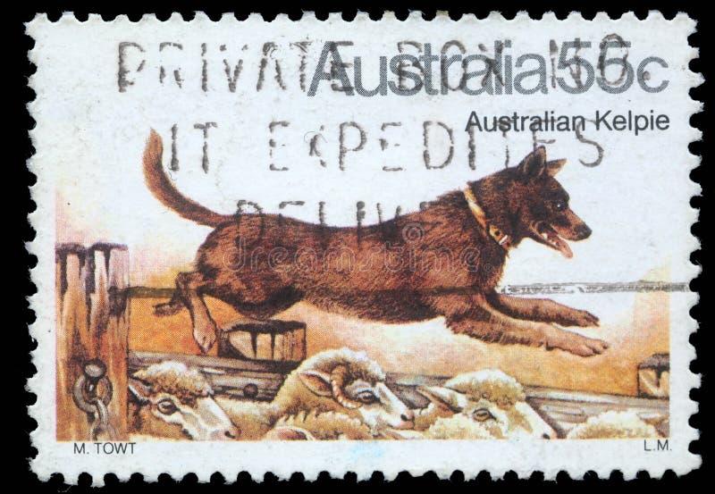 Der Stempel, der in Australien gedruckt wird, zeigt australischen Kelpie-Hund stockbild