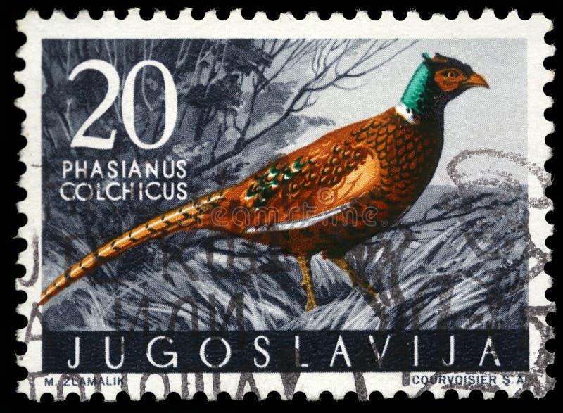 Der Stempel, der in Jugoslawien gedruckt wird, zeigt den Fasan stockbilder