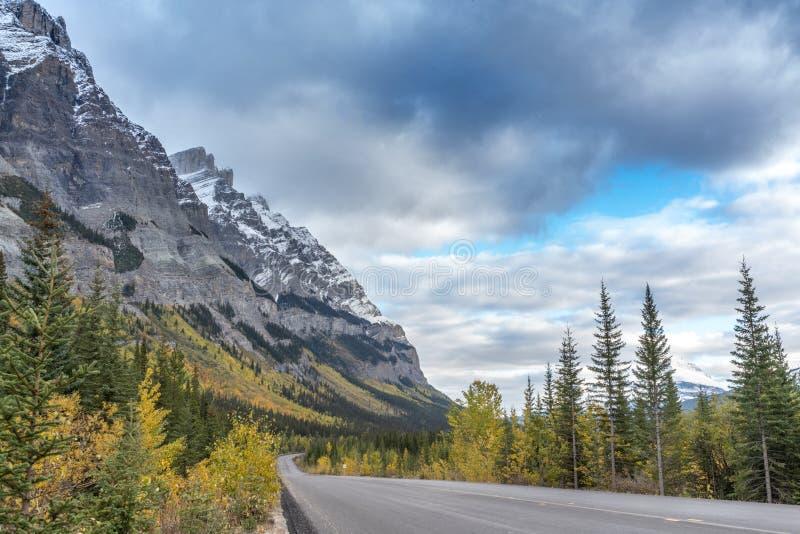 Der Straßenlauf zwischen gelben Herbstbäumen mit hohen felsigen Bergen in Jasper National-Park stockbild