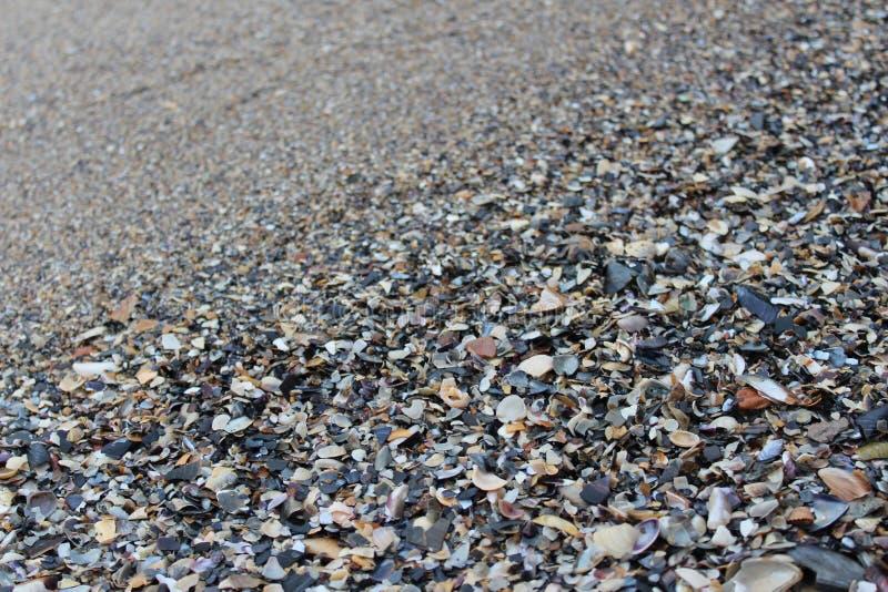 Der Strand auf dem Meer wird mit Muschel gestreut lizenzfreie stockbilder