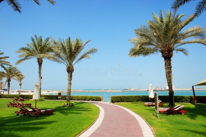Der Strand mit sunbeds auf dem grünen Rasen und Palmeschatten im Luxushotel lizenzfreies stockfoto