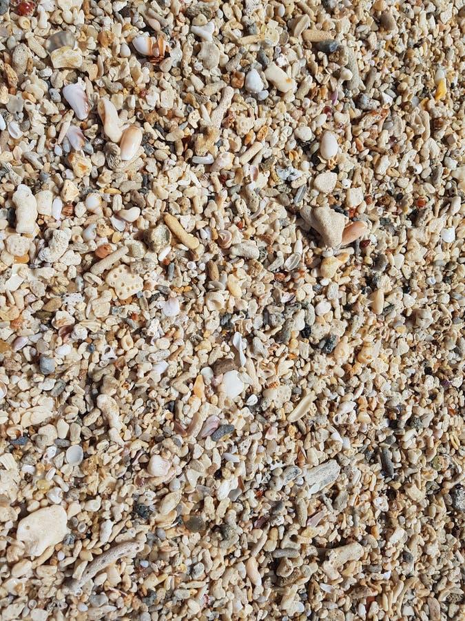 Der Strand wird mit Oberteilen und Korallen verunreinigt lizenzfreie stockfotos