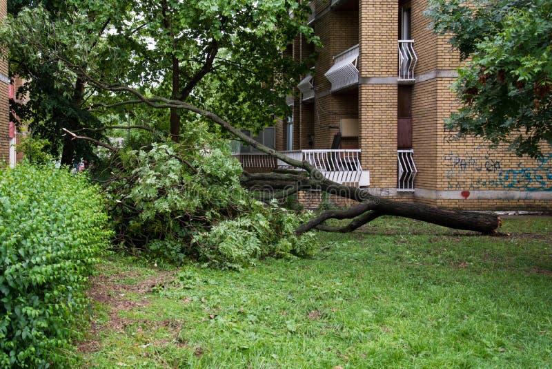 Der Sturm brach die Bäume lizenzfreie stockfotografie