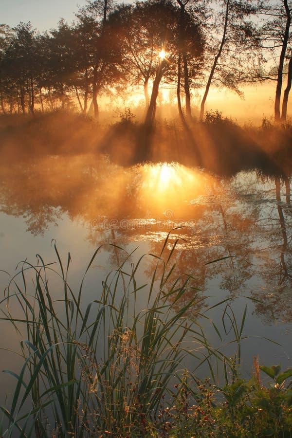 Der Sunraysdurchlauf durch den Nebel lizenzfreie stockbilder