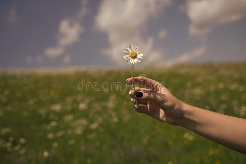 Der Tag der Frauen, Muttertag, Schönheit Sommer, Liebe, neues Leben, skincare Badekurortfrauen-Griffblume in blühendem Feldfrühli stockfotografie