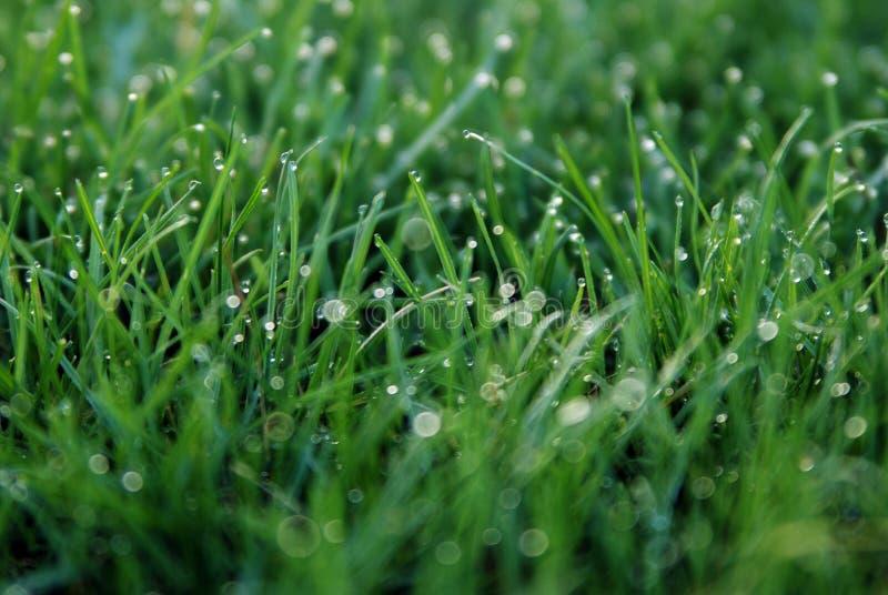 Der Tau. Frühlings-Gras lizenzfreie stockfotos
